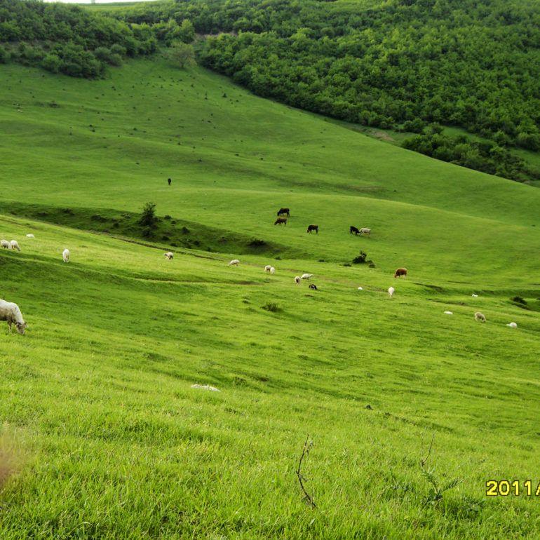 Фото Калининаул