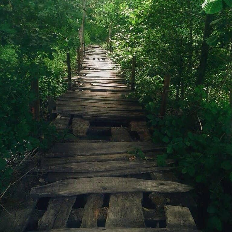 Фото Самурский лес весной