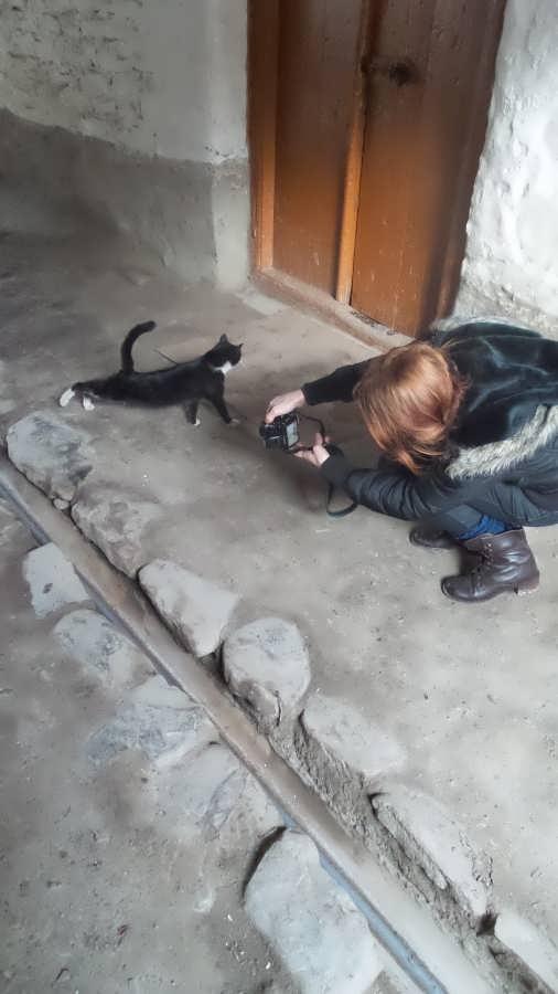 Photo грациозная кошка