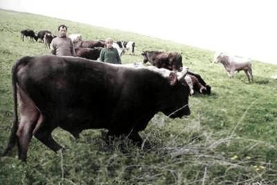 Животноводство - основная отрасль